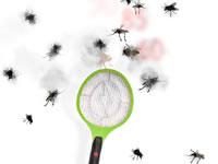 Jeu Insecto-smash