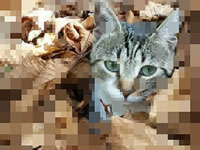 Jeu Repixel Find a Cat
