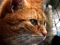 Jeu Jigsaw Puzzle Cats